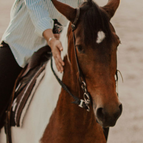 Better Bodies Therapy Equine Therapy